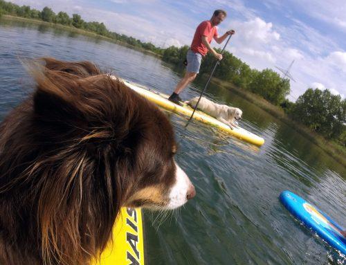 Mach SUP! Mensch und Hund auf dem Paddleboard